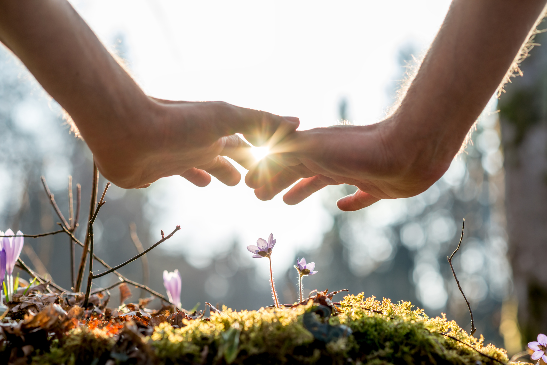 Cancer in the Time of COVID:  Welcome Spring, a time of renewal